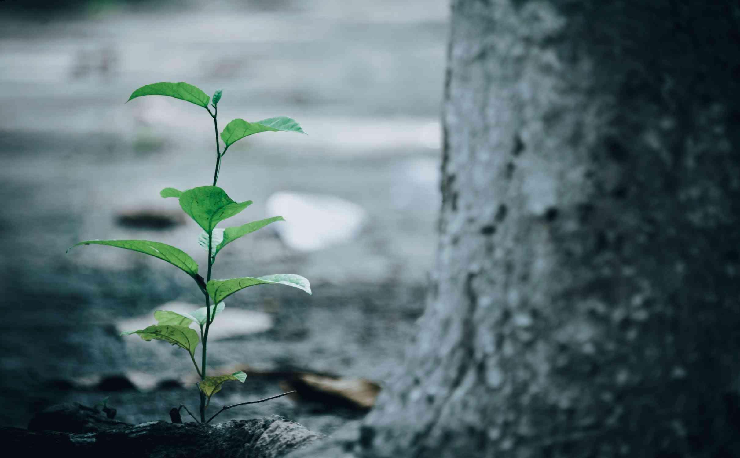 Ochrona środowiska w gospodarce odpadami