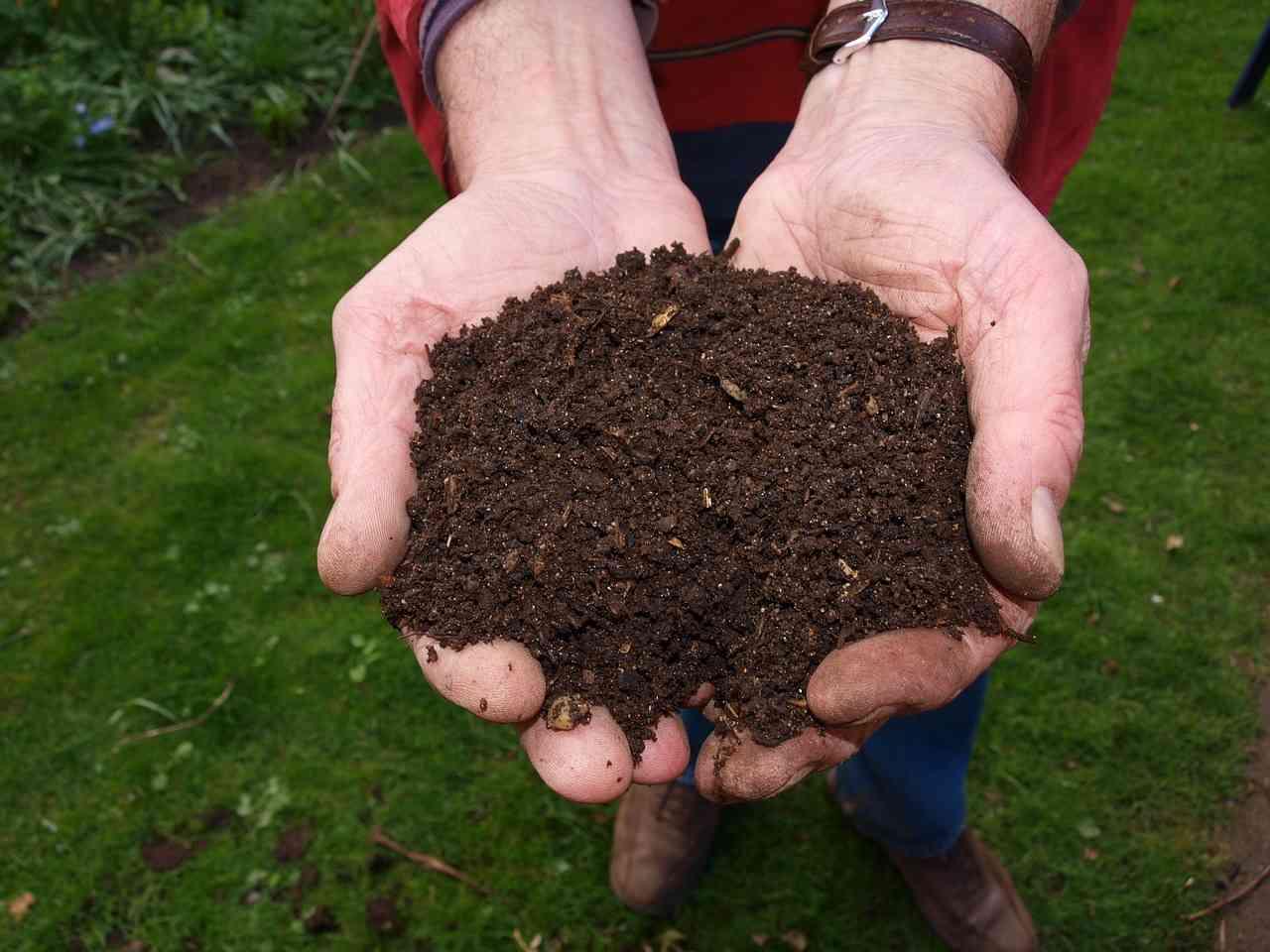 Z resztek roślinnych produkuje się kompost