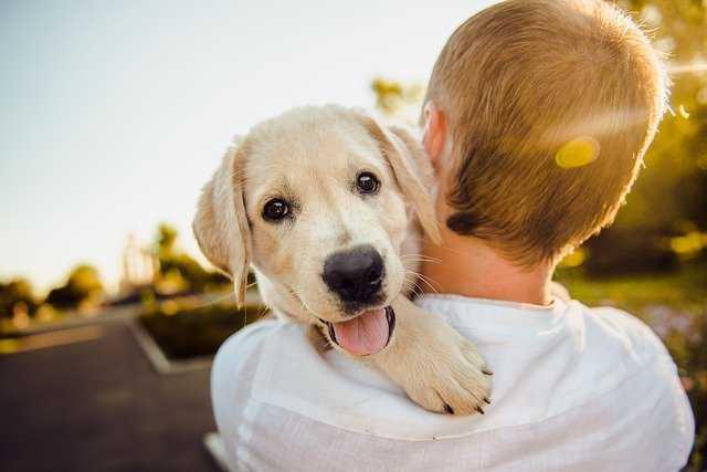 Gdzie wyrzucać psie odchody z posesji ?